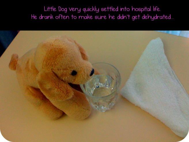 littledog2