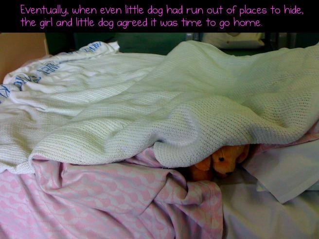 littledog21