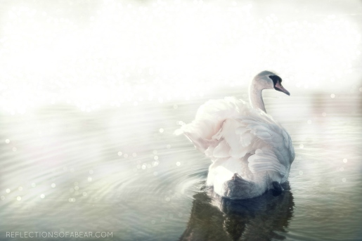Swan with watermark