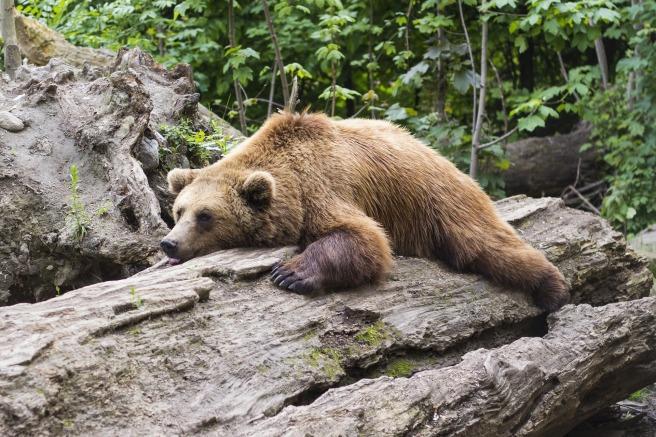 bear-1383980_1920.jpg